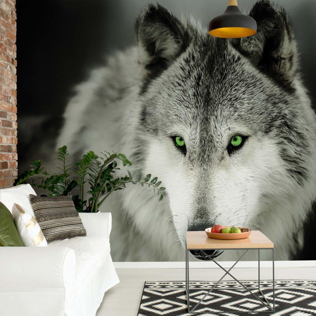 Wolf(2937WM)